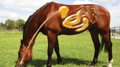 Know How avond Spijsvertering Paard