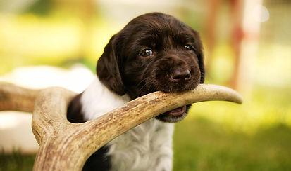 Рога оленя для собак DOGROG