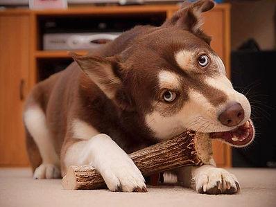 купить рог северного оленя для собаки лакомство догрог