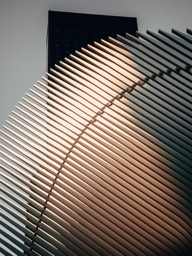 The Curve | Oculus