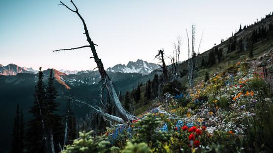 Harts Wildflowers.jpg