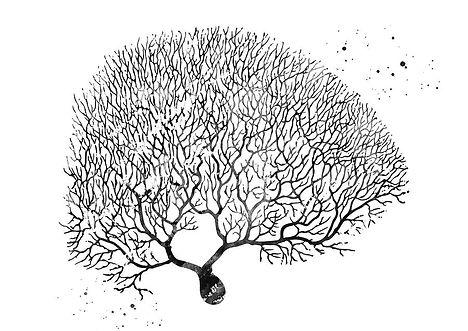 purkinje-neuron-11-erzebet-s.jpg