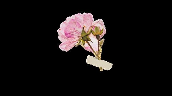 pinkflower.png
