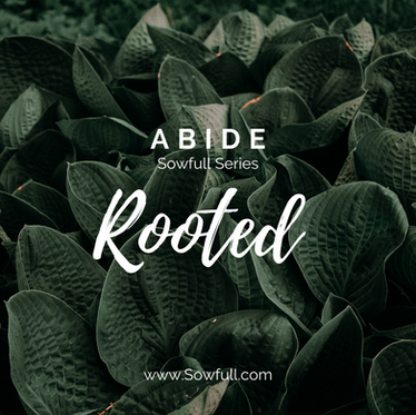 Abide: Rooted