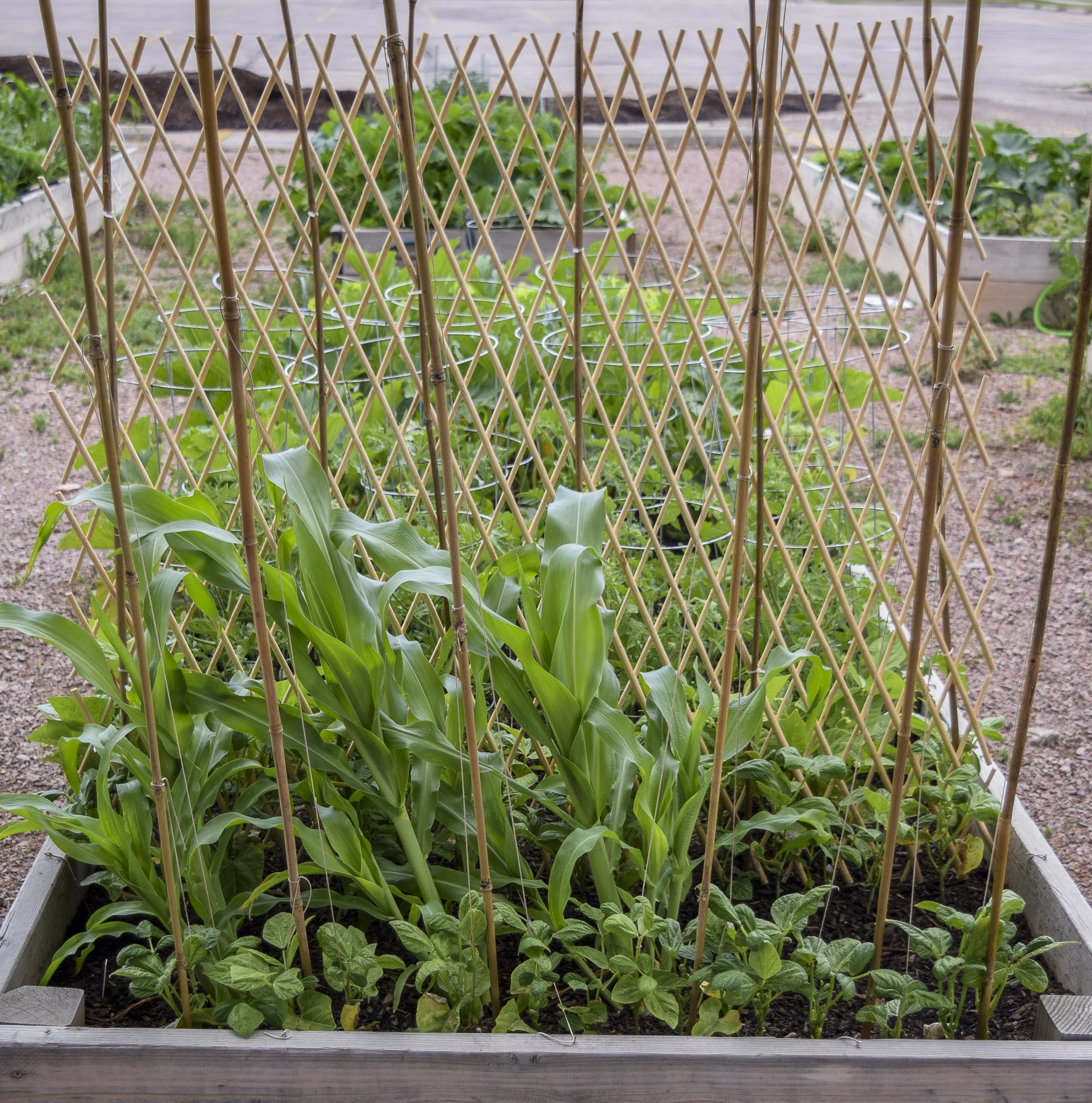 East Madison Community Garden