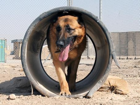 We train dogs – we must educate teachers (part 2)