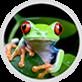 Beginner HTML | StudioWeb Programming Solution for Teachers_html.png