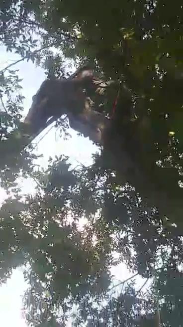 video-1598671760.mp4