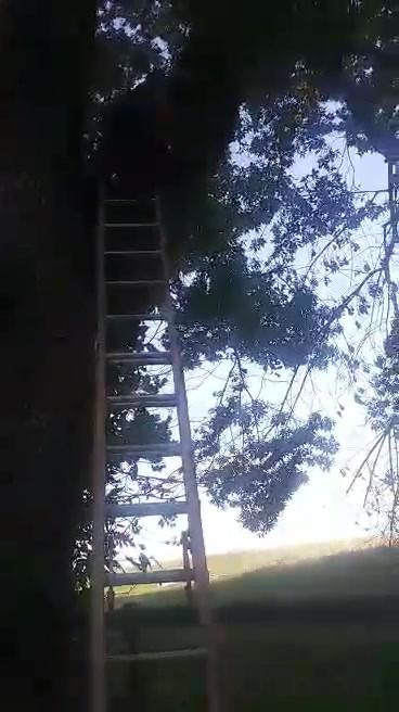 video-1598671792.mp4
