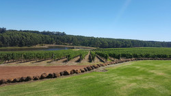 Small group wine tour Margaret River