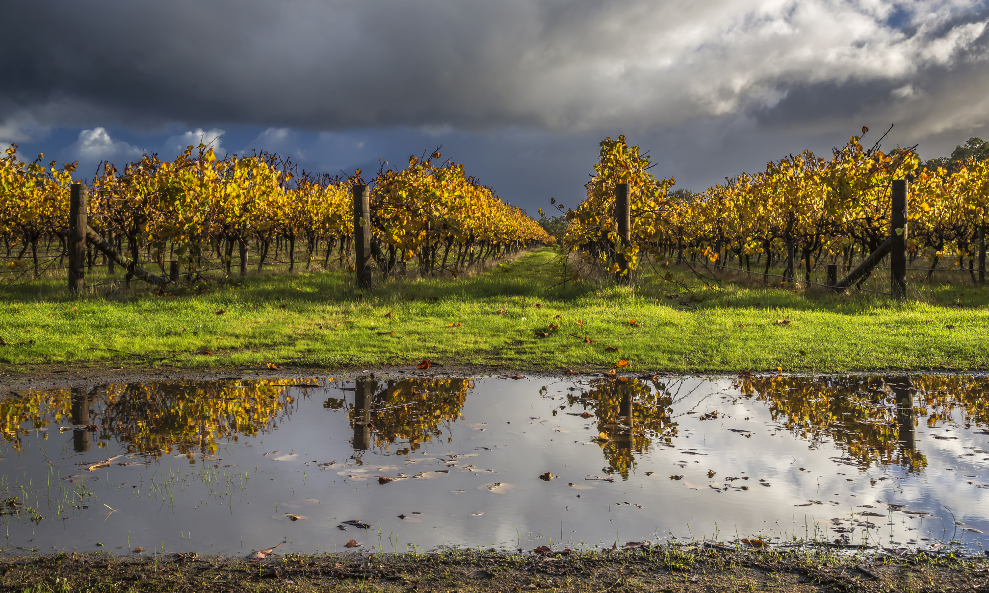 Brash_Vineyard_Reflection_autumn copy