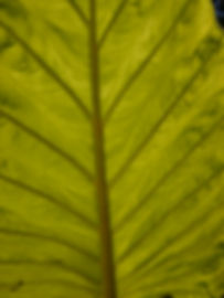 Vert (6).JPG
