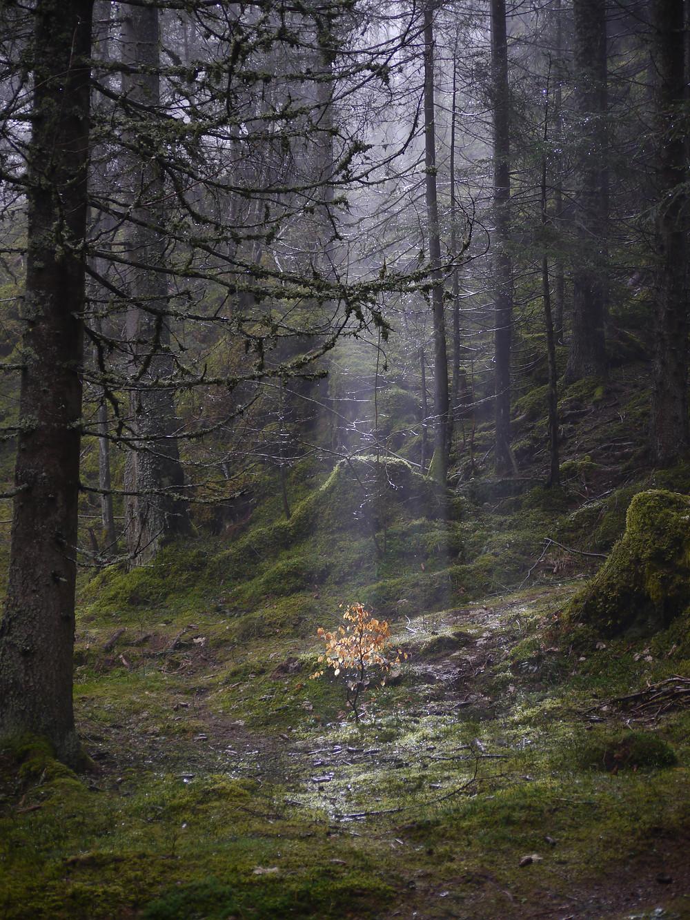 spiritualité, arbre, ancrage