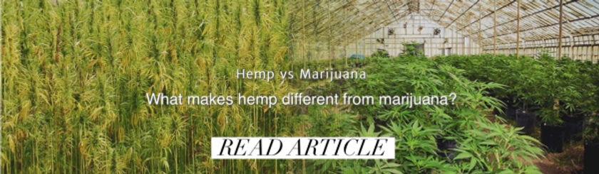 Hemp vs. Marijuana: What makes Hemp different