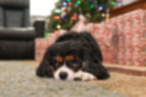Puppy HH.jpg