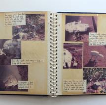 Photo story Page 7