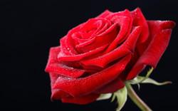 Valentine ll-Images