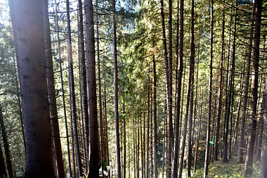 Natur, Wald, Wandern Ferienapartments