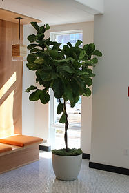 New Jersey Interior Landscaping