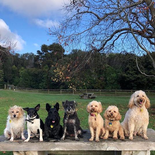 wednesday play group superstars 🌟 harry