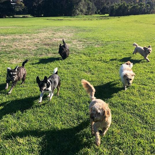 go littles! 🌟 edie, nas, pipi, bella, h