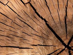 Cientistas criam a Super Madeira: mais resistente e mais leve que aço