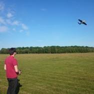Stingray in Flight.jpg