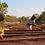 Thumbnail: *Orange Edition* Tanzania - Shimlangwada Estate