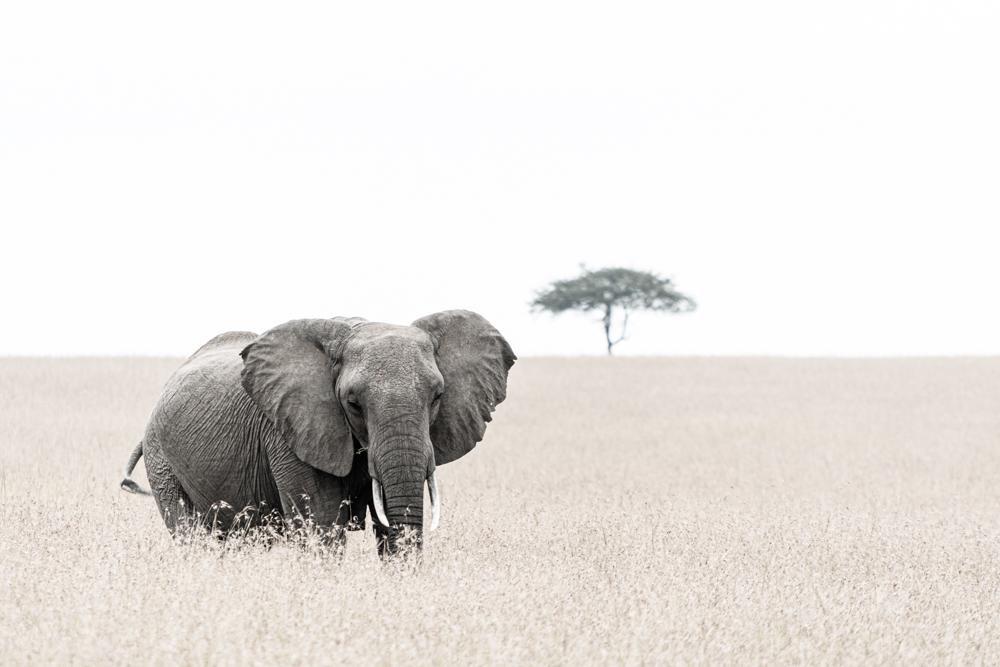 Africa Mía