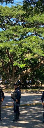 Paseo Dominical 04.jpg