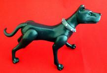 ace-the-dog (7).jpg