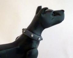 ace-the-dog (3).jpg