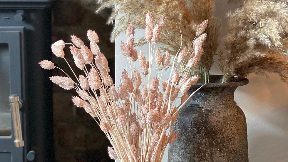 Bunch of pale pink phalaris