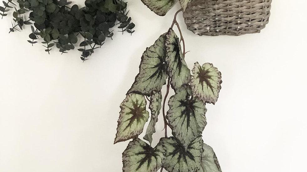 Trailing faux begonia green
