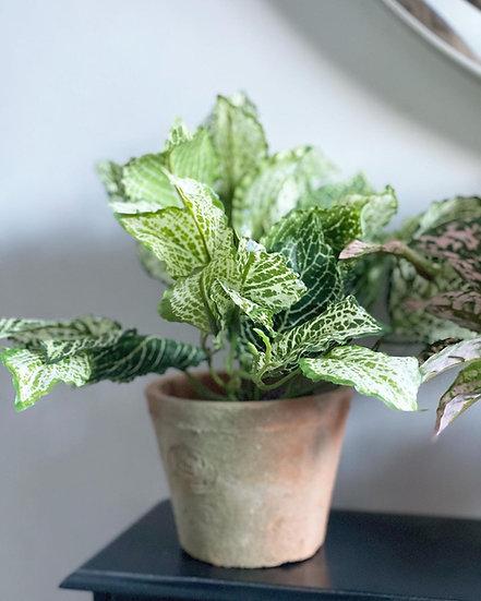 A faux fittonia bush in an aged terracotta pot