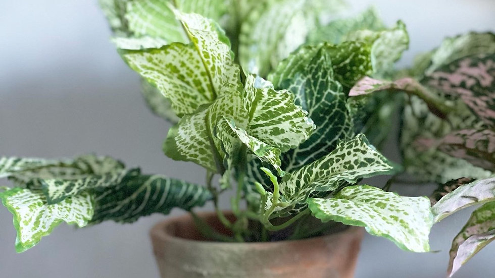 A faux fittonia bush in an aged terracotta pot