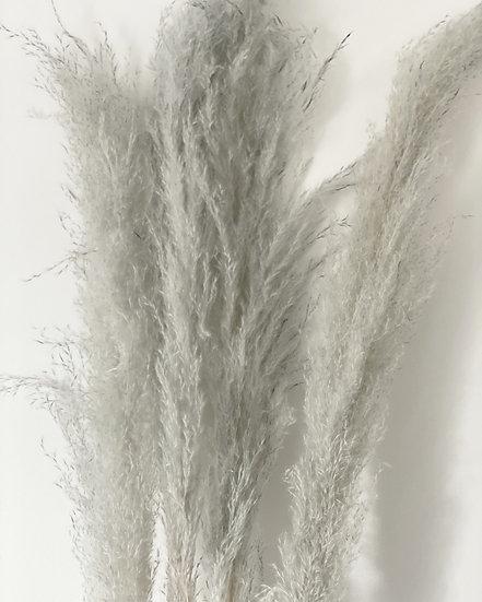 French grey pampas stem