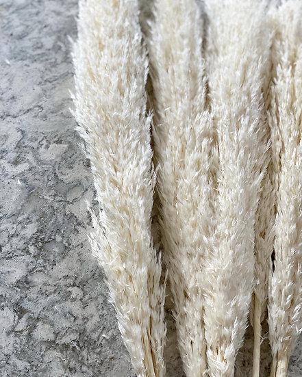 White pampas stem