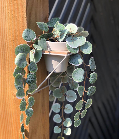 Wall planter in grey