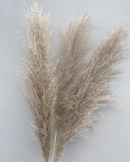 Set of 3 natural cortaderia pampas stems