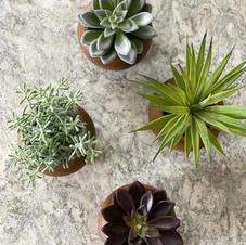 Potted faux plants and faux succulents