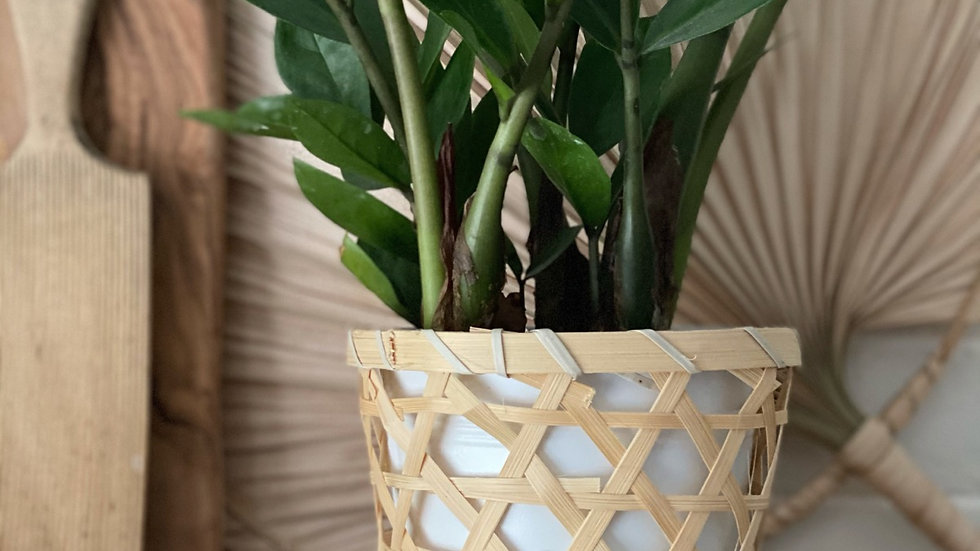 Bamboo covered metal plant pot
