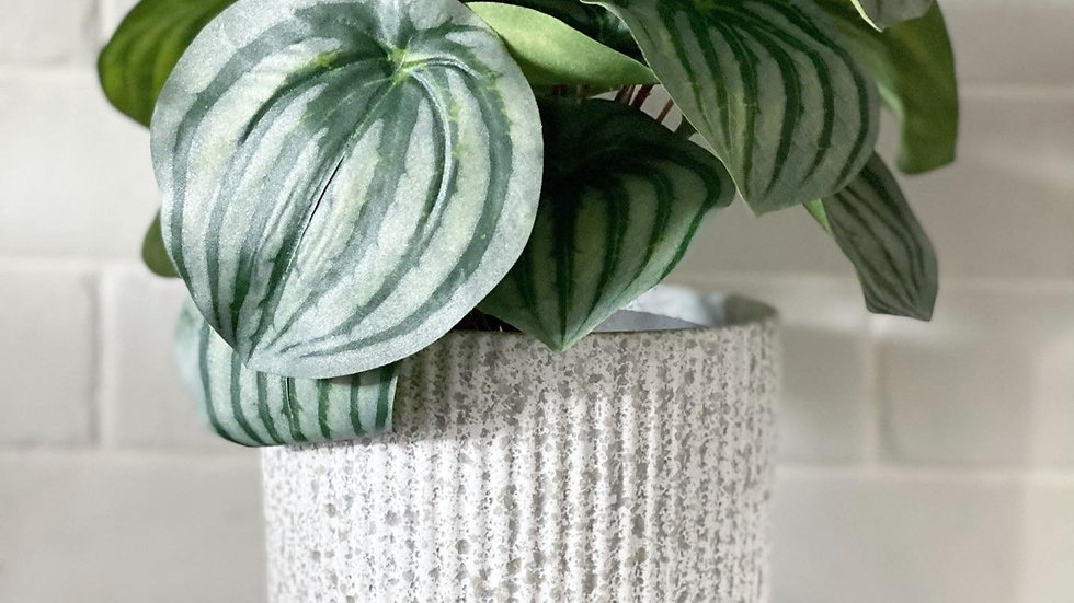 Peperomia faux plant in black pot