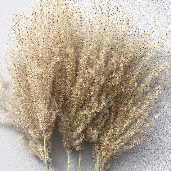 Fluffy reed grass single stem
