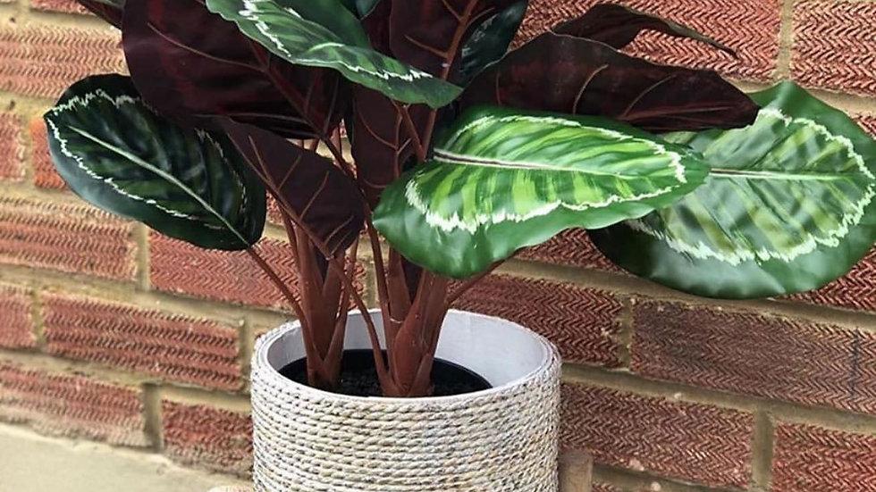 Calathea faux plant 47cm