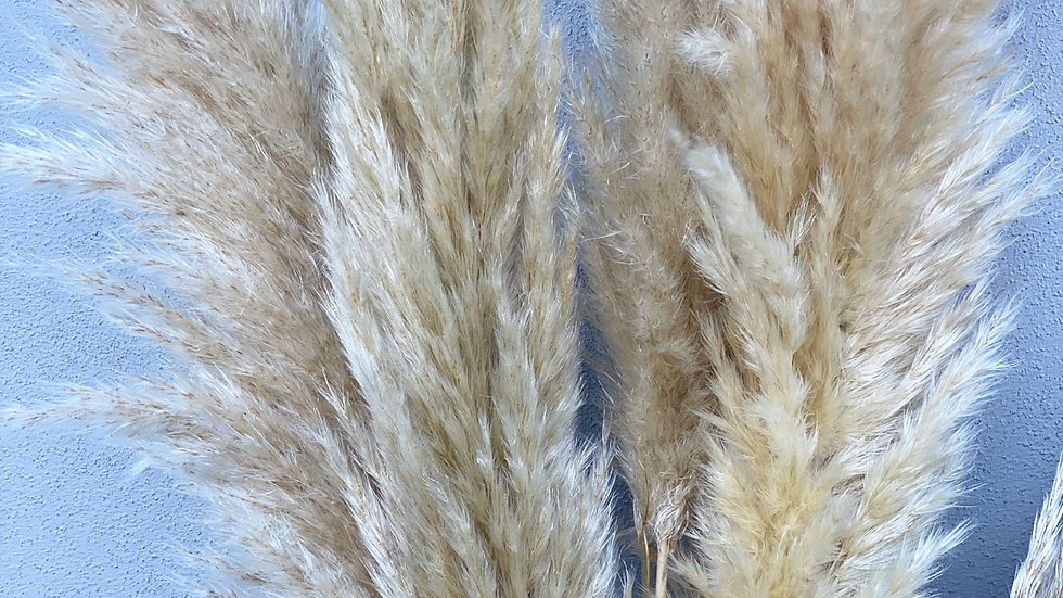 Cream tall fluffy pampas
