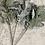 Thumbnail: Grey green lambs ear faux stem