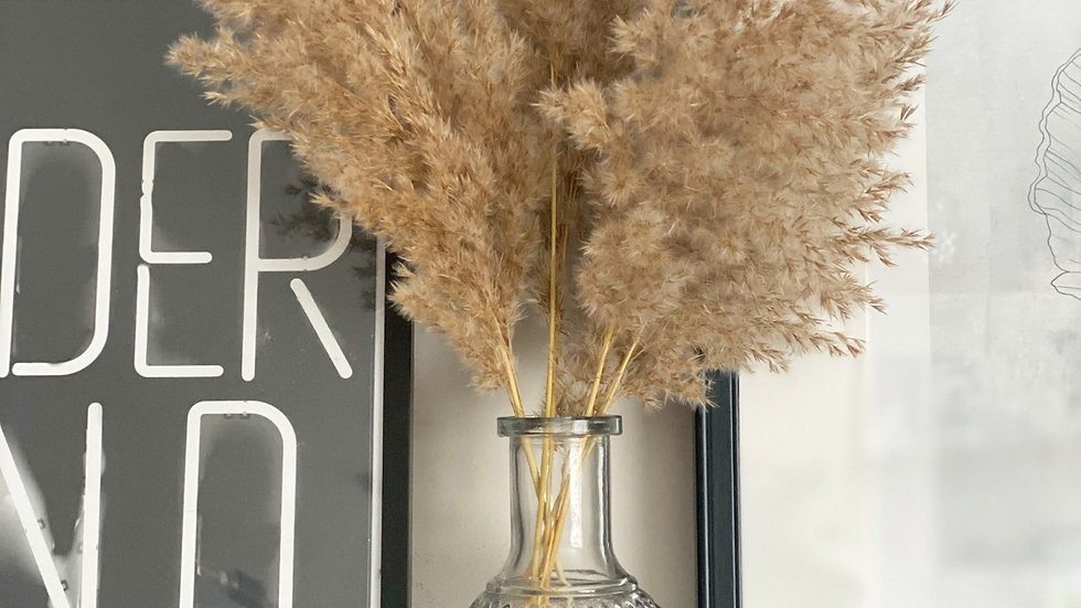 Bella vase and pampas stem set