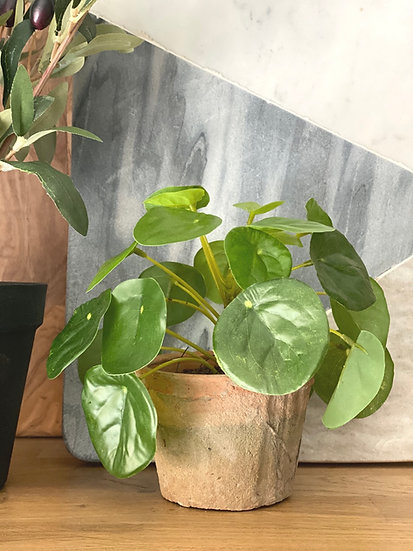 A faux pilea plant in an aged terracotta pot