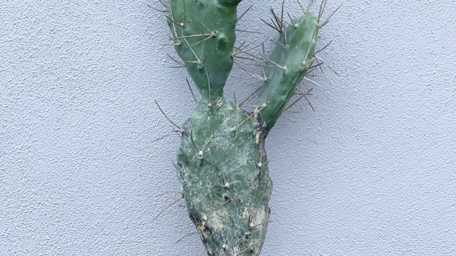 Faux large cactus 42cm tall